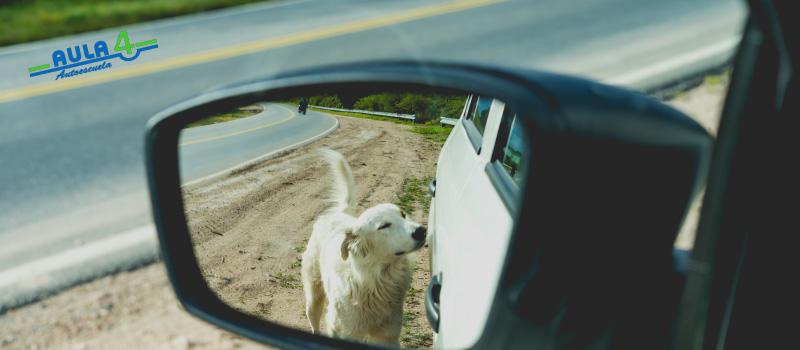 transportar-mascota-viajes
