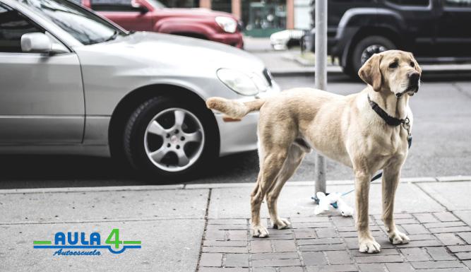 viajar con mascotas de forma segura
